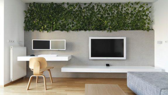 Designer Transforms Space With Indoor Plants